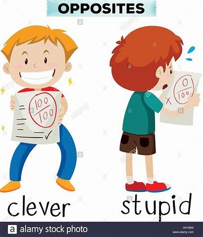 Opposite Clever Words Stupid Another Alamy