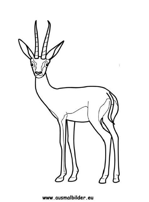 ausmalbilder gazelle gazellen malvorlagen