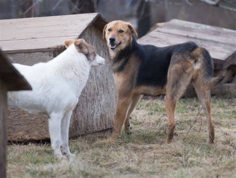 romanina rescue dog rehoming shelter rescue cross breed