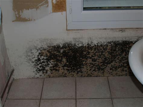 moisissure mur chambre chignons sur les murs chignons sur les murs with