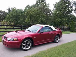 2004 Mustang GT 40th Anniversary edition | Mustang convertible, Ford mustang, Car ford