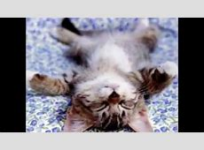 Süße Katzen Bilder YouTube