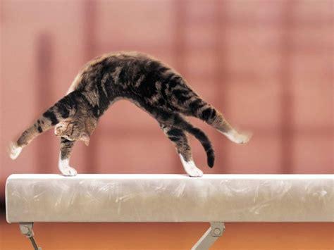 cat gymnastics doing gymnastics gymnastics cats