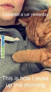 cat lover meme 1000 ideas about memes on funniest