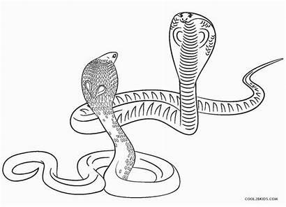 Coloring Snake Printable Snakes Sheet Adults Fangs
