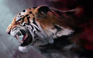 Tiger HD Wallpapers - Wallpaper Cave