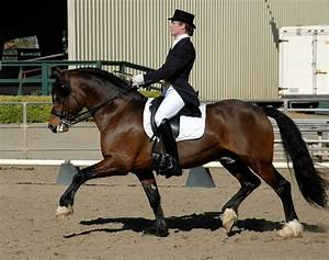 A Guide To Horse Trotting  Patterns  U0026 Speeds