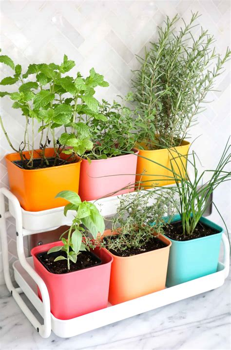 colorful indoor herb garden  beautiful mess