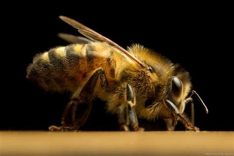 bee profile | Discover the benefits of honey
