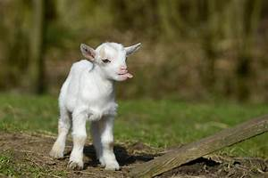 baby witte tong