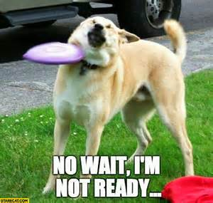 Halloween Riddles And Jokes by No Wait I M Not Ready Dog Hit By A Frisbee Starecat Com