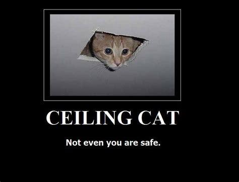 Ceiling Cat Meme - image 16656 ceiling cat know your meme