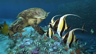 Sea Desktop Deep Ocean Computer Ps3 Wallpapersafari
