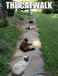 Catwalk Funny Meme