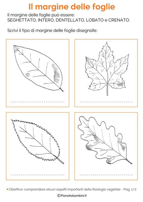 classificazione delle foglie schede didattiche da