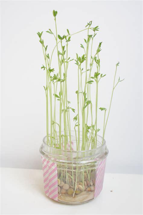 faire pousser d la en interieur diy petites plantes d int 233 rieur 224 faire pousser soi m 234 me