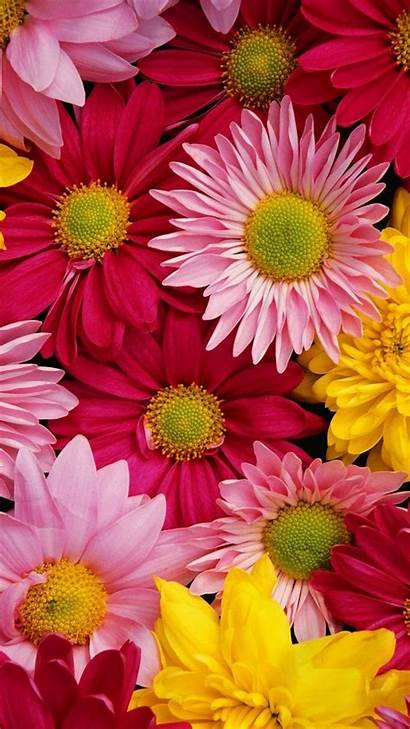 Iphone Flower Wallpapers Floral Mobile Colorful Flowers