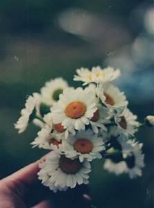 flores margaritas | Tumblr