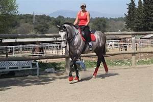equipement pour les chevaux gris With quelle couleur va avec le gris 1 quelle couleur dequipement pour un cheval gris