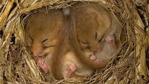 Halten Maulwürfe Winterschlaf : achtung niedlich wildtiere im winterschlaf welt der ~ Lizthompson.info Haus und Dekorationen