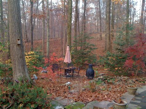 Fall Yard Cleanup -- It's That Time!!!