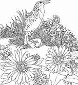 Sunflower Coloring Pages Adults Sunflowers Printable sketch template