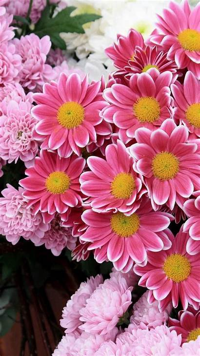 Iphone Flower Backgrounds Wallpapers Pink Flowers Floral