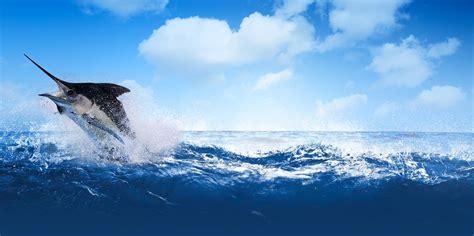 fishing water background marlin shark destin go charter