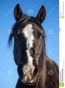 Black Horse Head Portrait Closeup Stock Image - Image of ...