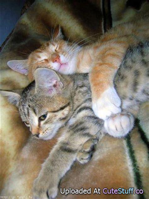 cute animals showing  love  pix pix bag