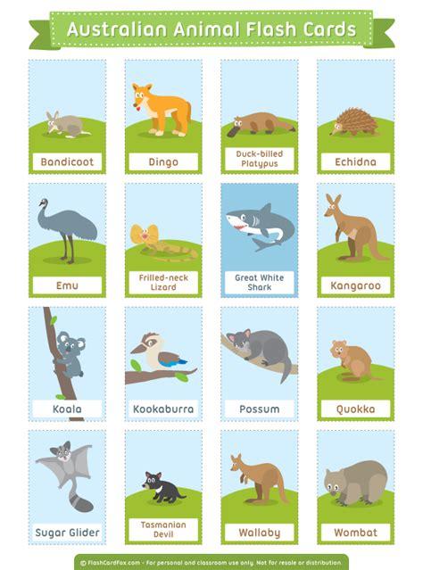 printable australian animal flash cards