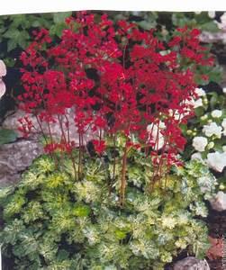 Plantes D Ombre Extérieur : plantes vivaces d ombre fleur exterieur maison retraite ~ Melissatoandfro.com Idées de Décoration