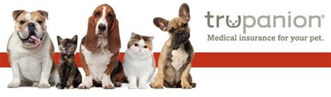 Our pet insurance comparison pits providers head to head, with charts that compare deductibles read our reviews of the best pet insurance companies on the market, with pros, cons, pricing, and. Pet insurance worldwide