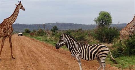 madikwe  sun city  drive safari safari