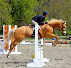 Four Aces Equestrian Center - News
