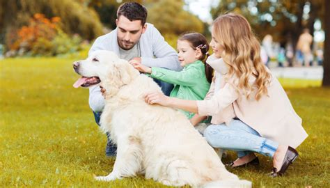 called  dogs  shows dogs place  family