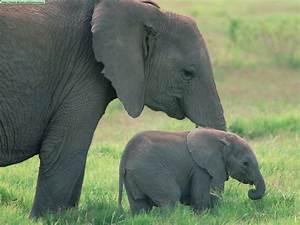 Fotos de elefantes (I)