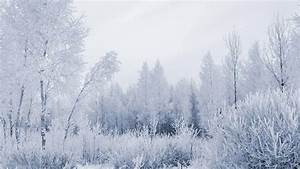 Snowy Forest Wallpapers