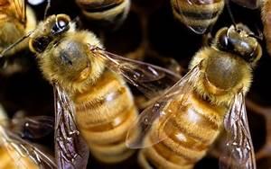Mittel Gegen Bienen : s d carolina millionen von bienen sterben nach insektizideinsatz gegen zika moskitos south ~ Frokenaadalensverden.com Haus und Dekorationen