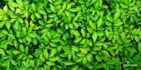 Wirkung Farbe Grün by Bedeutung Und Wirkung Der Farbe Gr 252 N Viversum