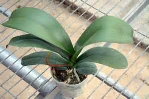 rempoter une orchid 233 e le magazine gamm vert