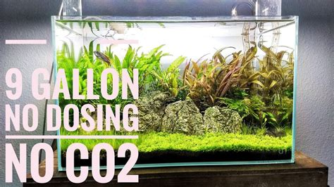 How To Make Aquascape by How To Create An Amazing Low Tech Aquascape No Co2 No