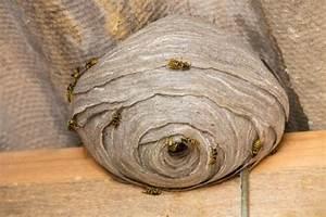 Wespennest Entfernen Vermieter : wespennester entfernen und umsiedeln mein sch ner garten ~ Orissabook.com Haus und Dekorationen