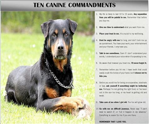 rottie quotes images  pinterest dog quotes