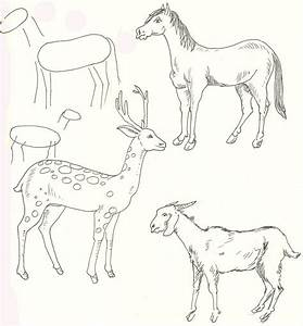 Animal Step By Easy Outline Drawing Horse Deer Goat ...
