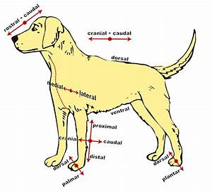 31 Dog Diagram Of The Body