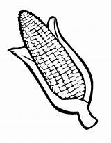 Corn Coloring Drawing Ear Cob Indian Pages Template Stalk Field Stalks Thanksgiving Sketch Getdrawings Printable Print Templates Autumn Getcolorings Button sketch template