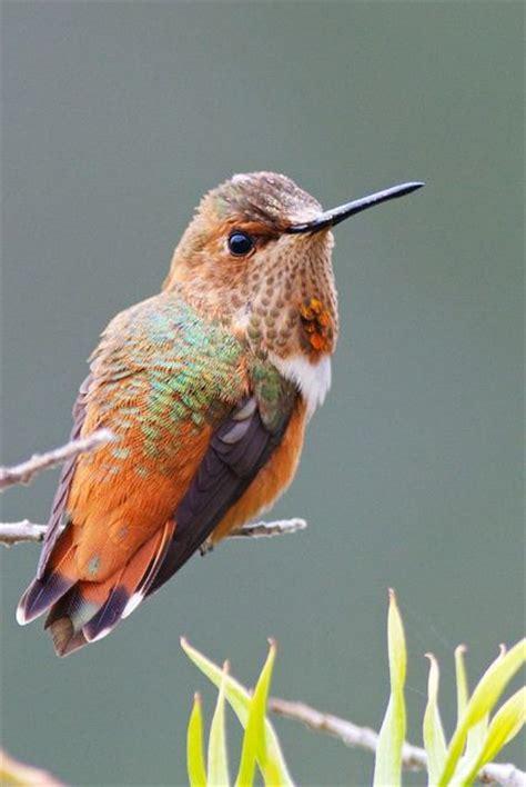 hummingbirds florida and beautiful beautiful on pinterest