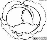 Cabbage Coloring Pages Coloringway sketch template