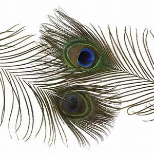 """Peacock Tail Eyes Natural - 8 -15"""""""